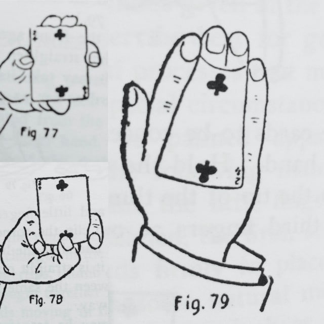 The Back Palm